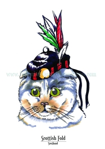 Feline Origins: Scottish Fold