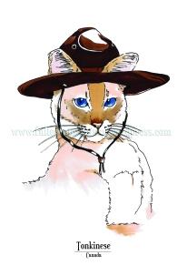 Feline Origins: Tonkinese