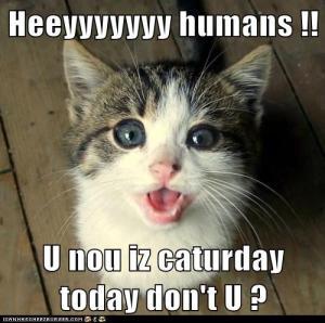 Heeyyyy-Humans-U-Nou-Iz-Caturday-Today-Dont-U